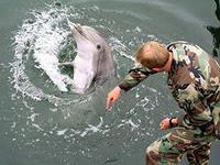 Крымские боевые дельфины будут служить во  Флоте России
