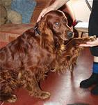 В Благовещенске владельцы собак проверили своих любимцев