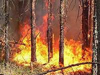 Власти Приамурья нуждаются в дополнительных средствах на тушение пожаров