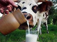 Конкурентная борьба на амурском молочном рынке обострилась