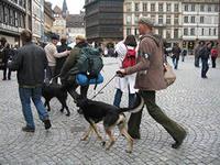Правила содержания собак должны быть такими же, как в цивилизованных странах