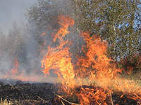 В Амурской области действует природный пожар