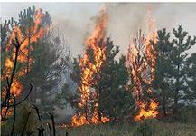 В трёх районах Приамурья усилится чрезвычайная пожарная опасность