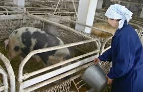 Средства на строительство и реконструкцию объектов мясного скотоводства