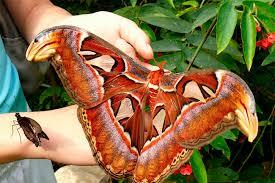 В краеведческом музее появятся тропические бабочки