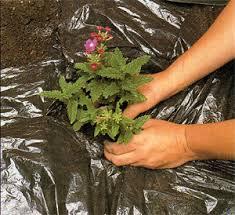 Мульчирование как агротехнический прием