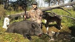 С августа открывается охота на кабана в Амурской области
