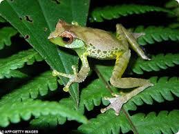 Новый вид лягушек выявлен в Амурской области