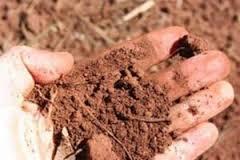 Почва в сёлах Амурской области пройдет проверку на споры сибирской язвы