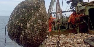 Жители Амурской области стали меньше любить рыбу