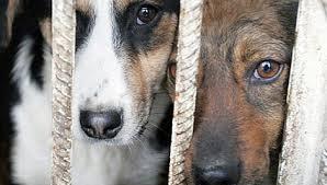 Закон о регулировании безнадзорных животных может быть отправлен на доработку