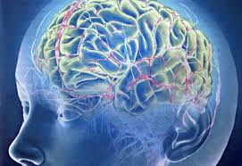 Сканирование мозга поможет предсказывать будущее человека