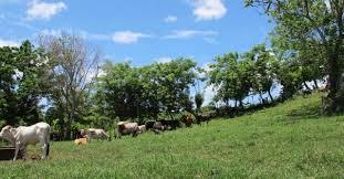 Бесплатные участки земли первыми получат жители Завитинского района