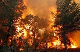 В марте следует ожидать лесные пожары