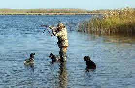 Запрет охоты на пернатых