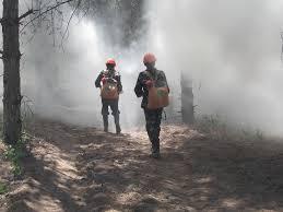 Сегодня около города Свободный загорелся лес