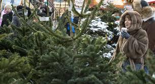 В Белогорске впервые пройдет частный елочный базар