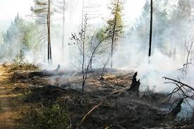 Сезон паводков плавно перерастает в сезон пожаров