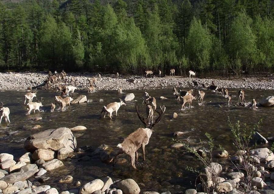 В Зейском районе появится Национальный парк